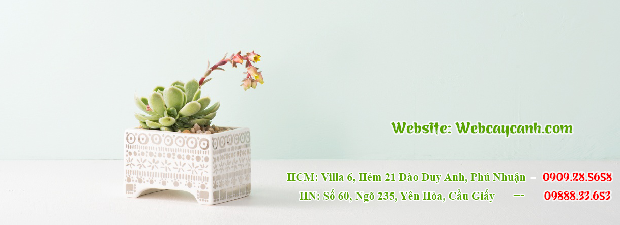 banner-web-cay-canh