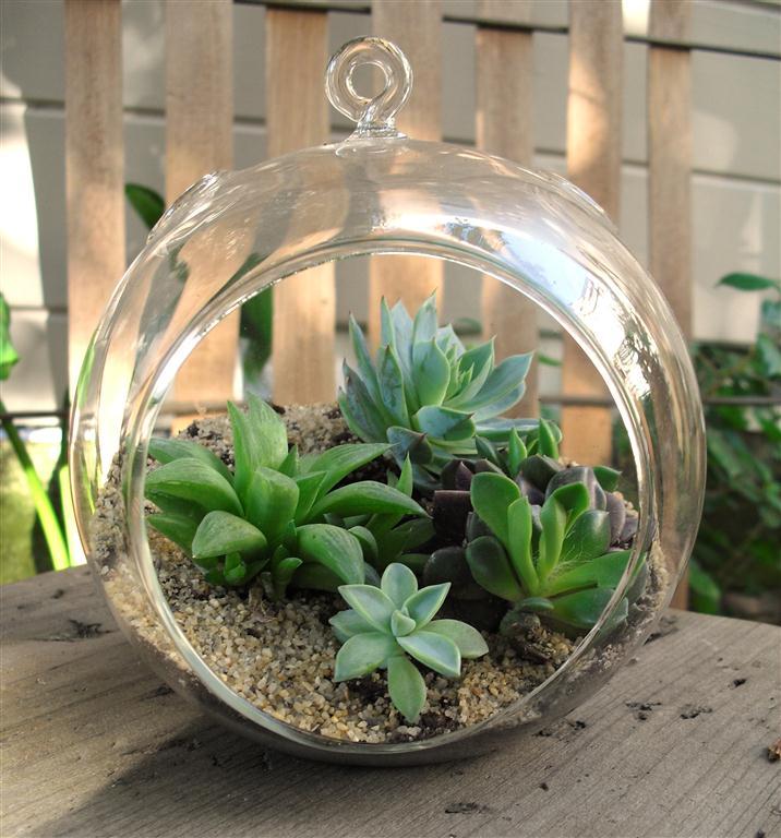 Terrarium-succulents-Medium
