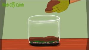 huong-dan-cach-lam-terrarium-3