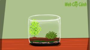 huong-dan-cach-lam-terrarium-4