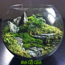 huong-dan-cach-trong-terrarium