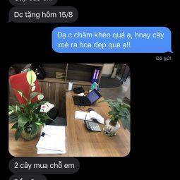 chi-huong-hcm