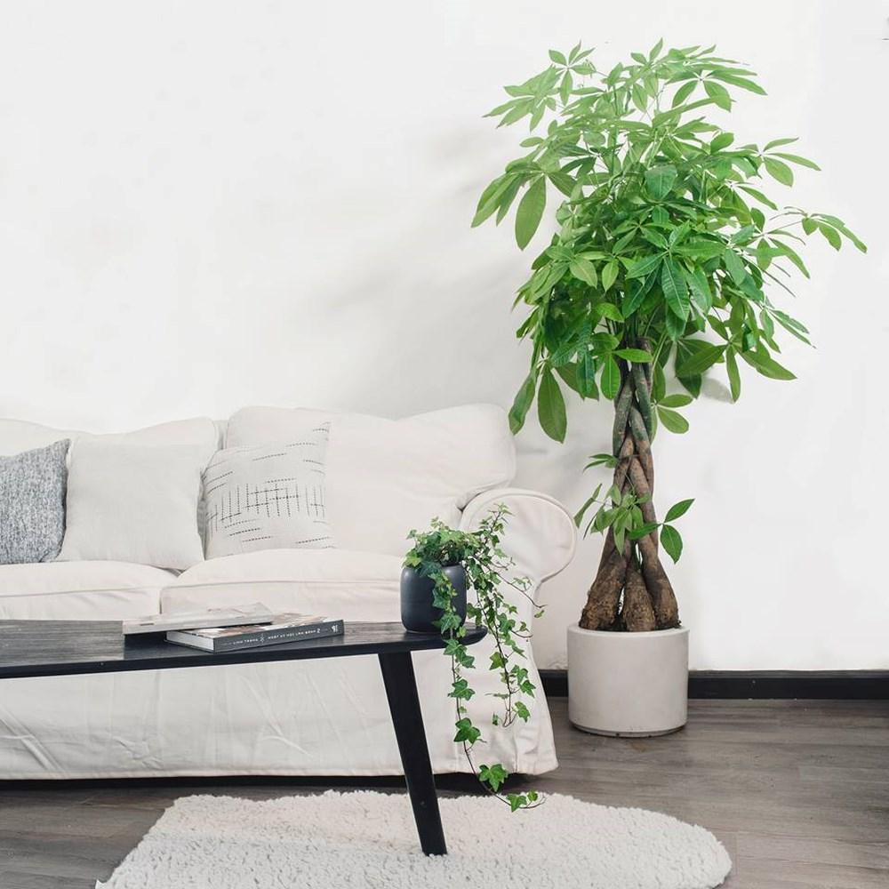 Kết quả hình ảnh cho cây xanh trong nhà