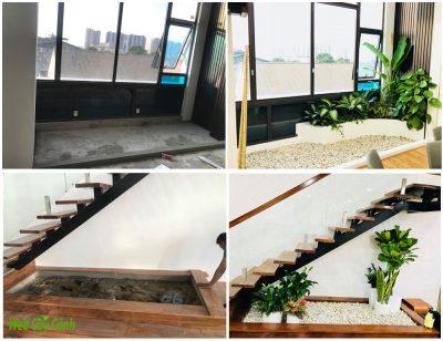 Thiết kế và trồng cây cho nhà biệt thự