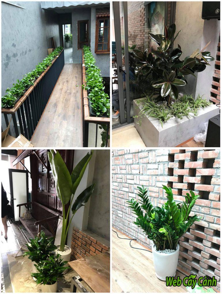 trồng cây cho nhà hàng