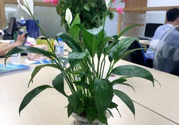 10 cây trồng trong phòng ngủ tăng tuổi thọ cho con người
