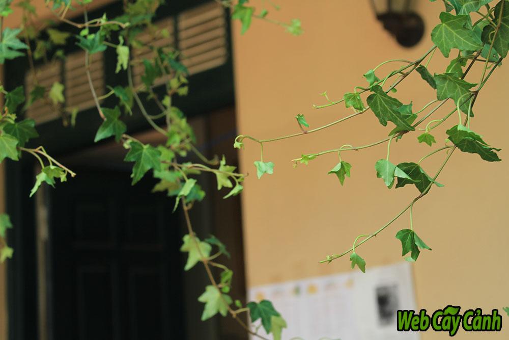 10-loai-cay-nen-trong-trong-nha-giup-tien-vao-nhu-nuoc