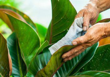 bảng báo giá chăm sóc cây