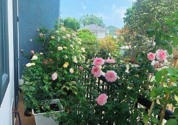 Nơi để hoa hồng