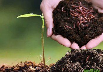 phân trùn quế tốt cho cây