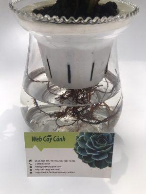 đổ nước cho cây thủy sinh